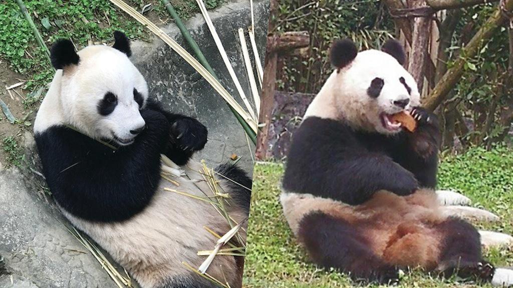 Pandojen Suomenkieliset Nimet Selvilla Ahtari Zoo